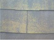 屋根瓦のカビ・苔・藻